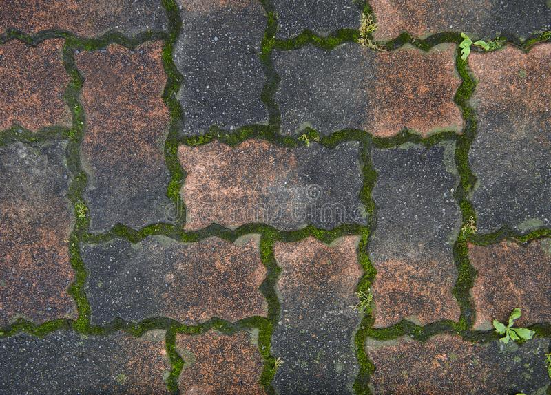 Ladrillo viejo y pavimento verde del piso del musgo fotografía de archivo