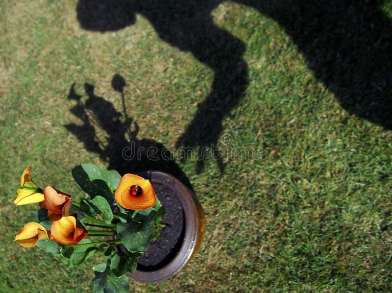 Ladro del tulipano! immagini stock libere da diritti