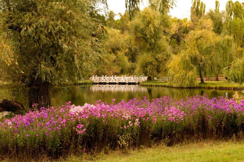 Ladscape del otoño con las flores imagen de archivo libre de regalías