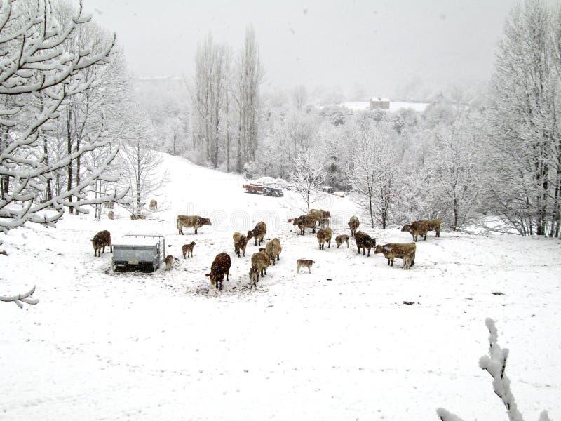 Ladscape nevado em Pyrenees, Espanha imagens de stock