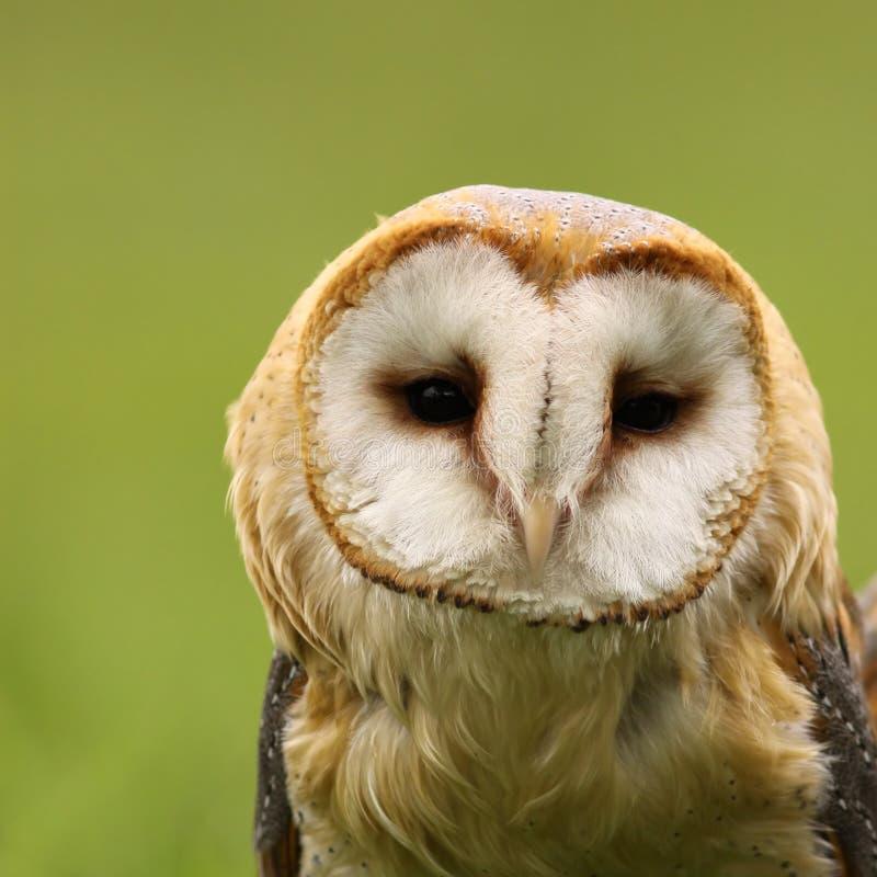 ladugård som ser owlen dig royaltyfri fotografi