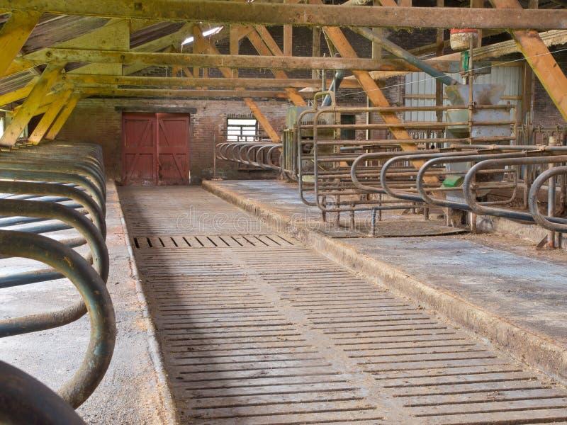 Ladugården med att ligga för ko boxas royaltyfria bilder