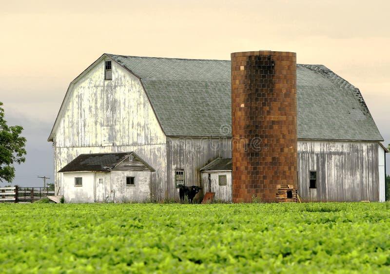 ladugårdmorgon arkivfoto