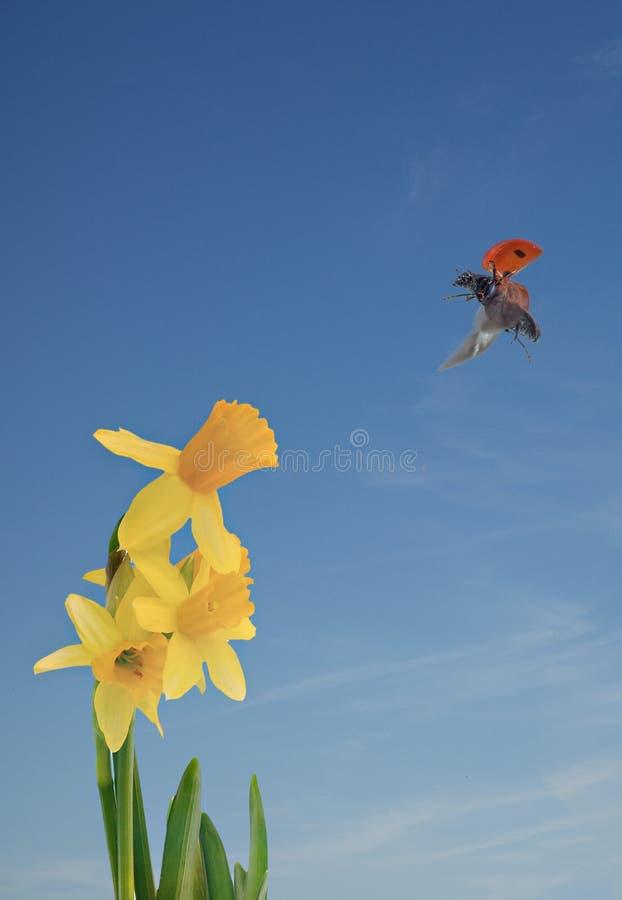 Lady bird landing stock image