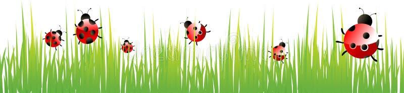 Lady bug. Ladybugs sitting on grass background stock illustration