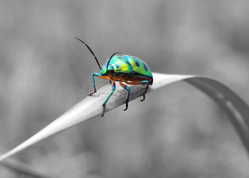Lady Bug Royalty Free Stock Photography