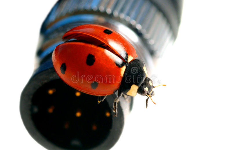 Lady Bug Gets cable royalty free stock photography