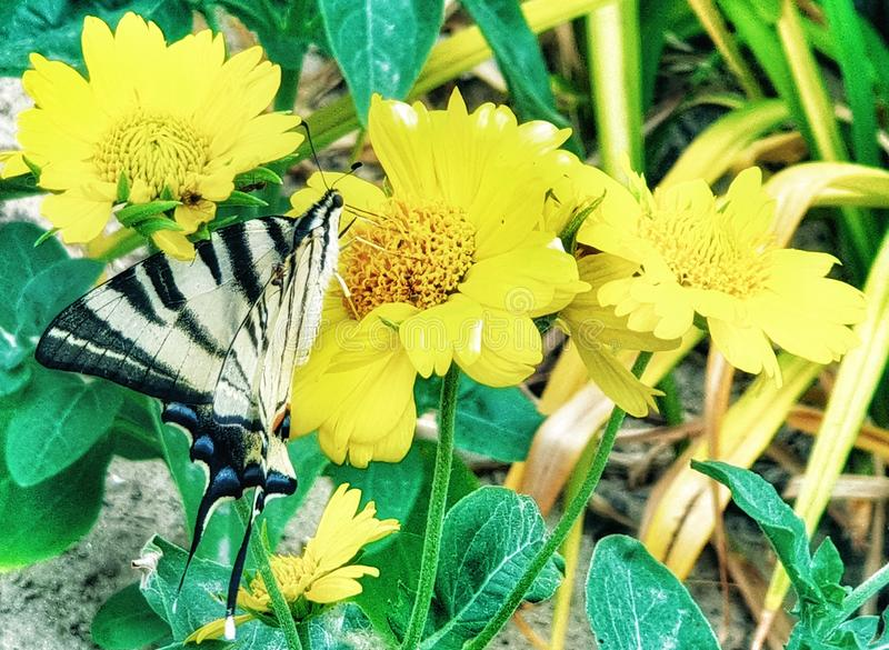 Lady butterflies  on the flower stock image