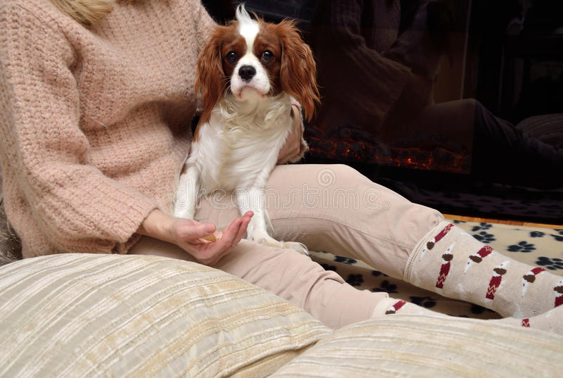 Lady and dog (Cavalier King Charles spaniel) enjoying by the fir. Lady and dog (Cavalier King Charles spaniel) sitting by the fireplace stock photos