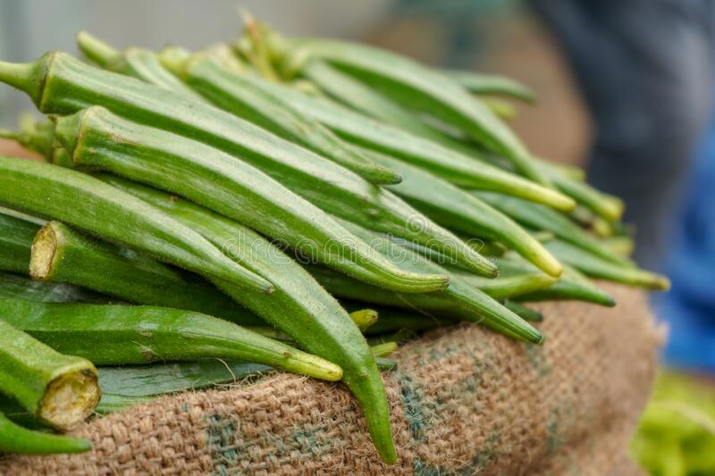 2,632 Lady Finger Vegetable Photos - Free & Royalty-Free Stock Photos from  Dreamstime  Health Benefits of Lady Finger lady finger okra vegetable market lady finger okrar vegetable market early morning fresh vegetables market 170101213
