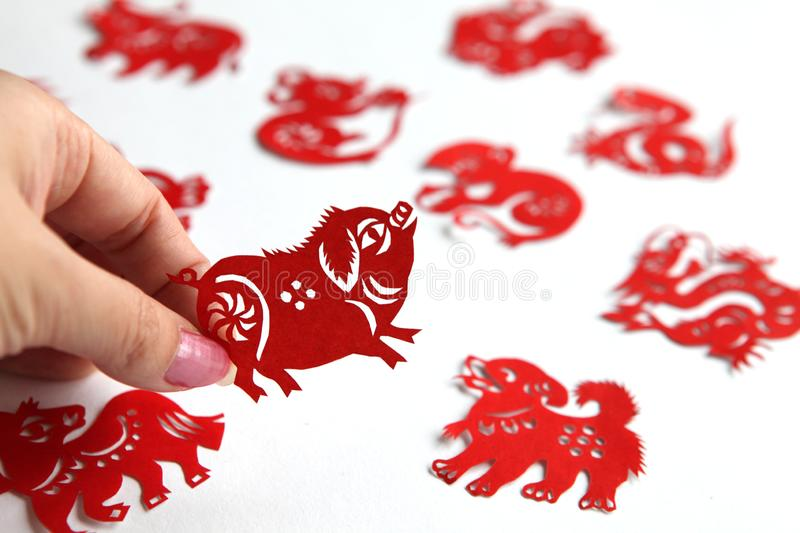 Red Chinese zodiac papercutting, Year of pig. Lady hand holding a red Chinese pig zodiac paper-cut,background with different zodiac paper-cuts stock photos