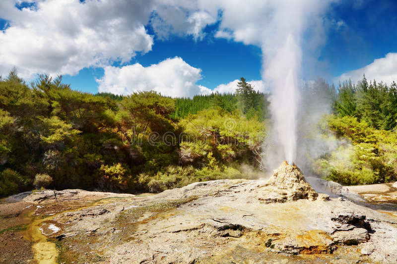 Lady Knox Geyser. New Zealand stock image