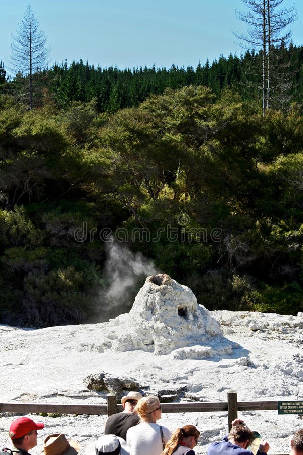 Download Lady Knox Geyser, New Zealand Editorial Photo - Image: 19519151