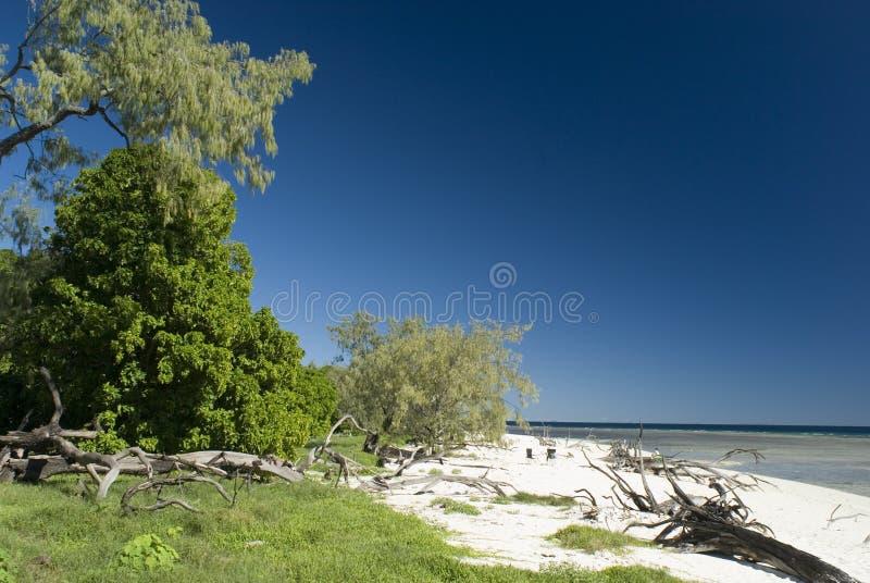 Lady Musgrave Island, Grande Recife imagens de stock
