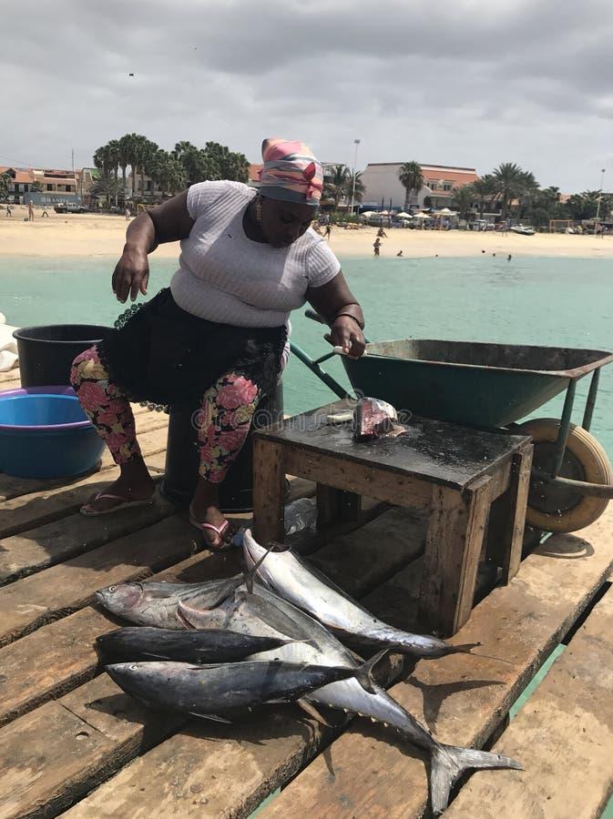 Tuna fish on dock royalty free stock photos