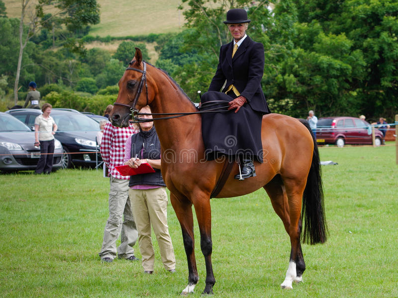 Lady riding side saddle. A lady riding side saddle at the North Lonsdale Agricultural show stock photo