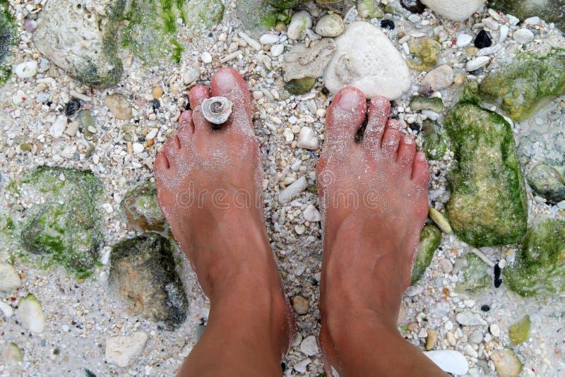 Lady& x27; s-foten på ett skal sätter på land, den Boracay ön, Filippinerna royaltyfria bilder