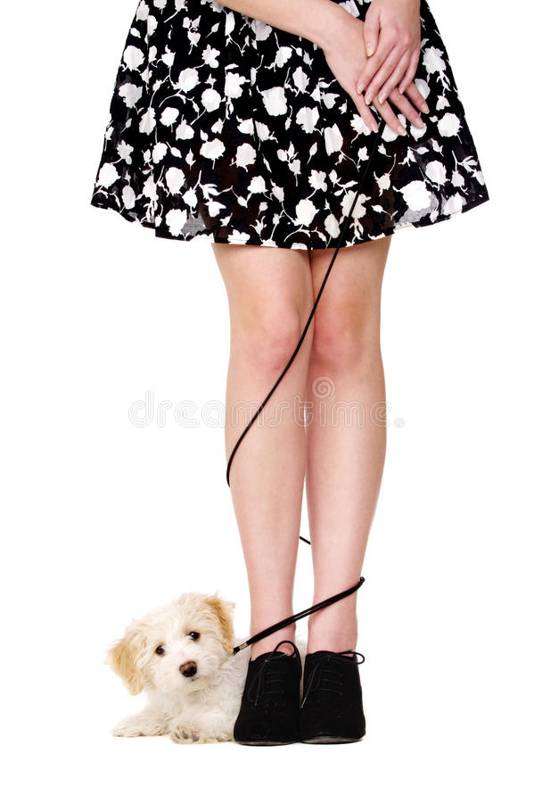 Lady's legs tangled with a puppy on a black lead stock photography
