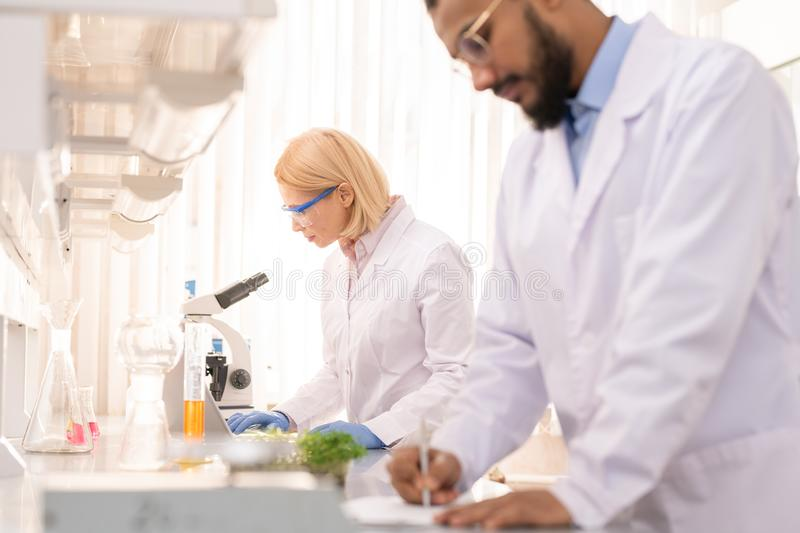 Lady scientist working on experiment stock photos