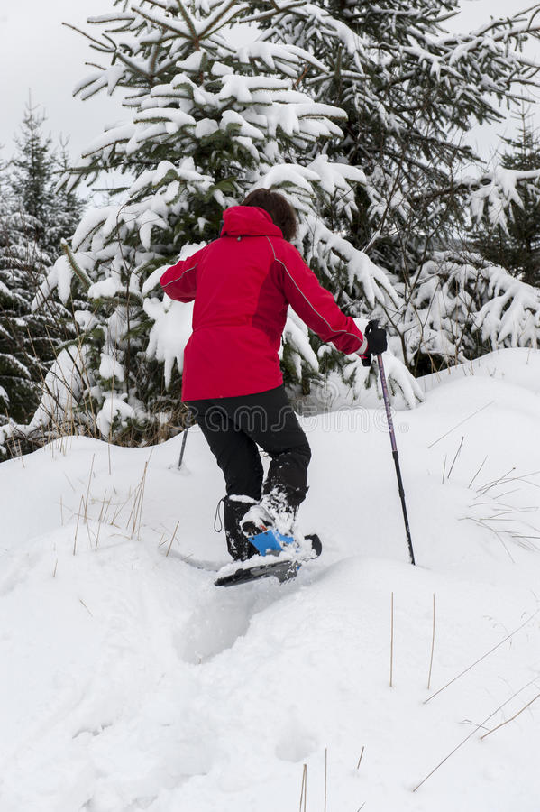 Lady snow shoeing in forest royalty free stock images