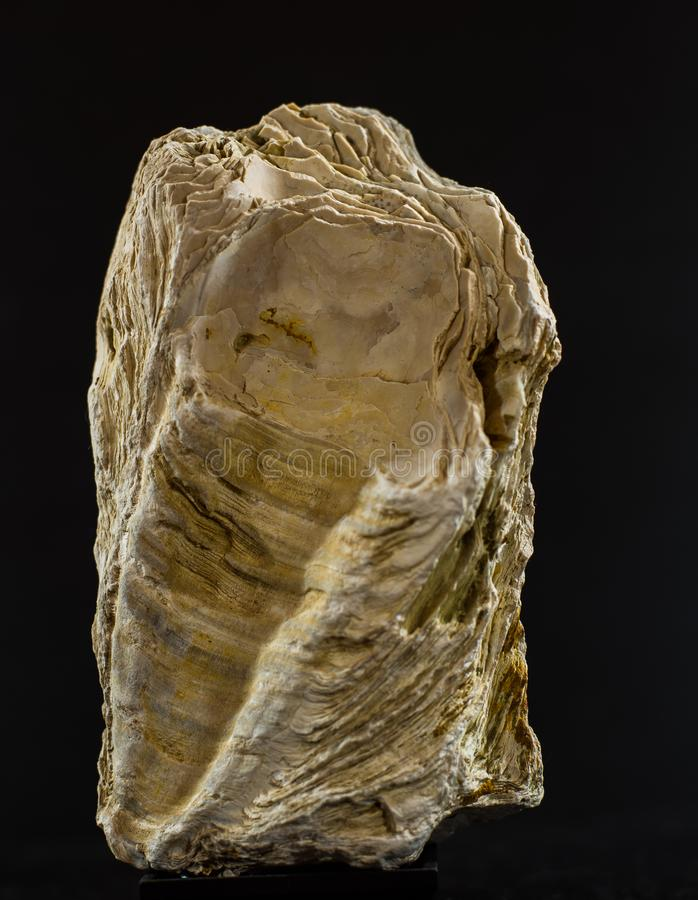 The lady of Stone. Found in a river where it was dragged giving it a statue of a lady being simply a fossilized stone stock images