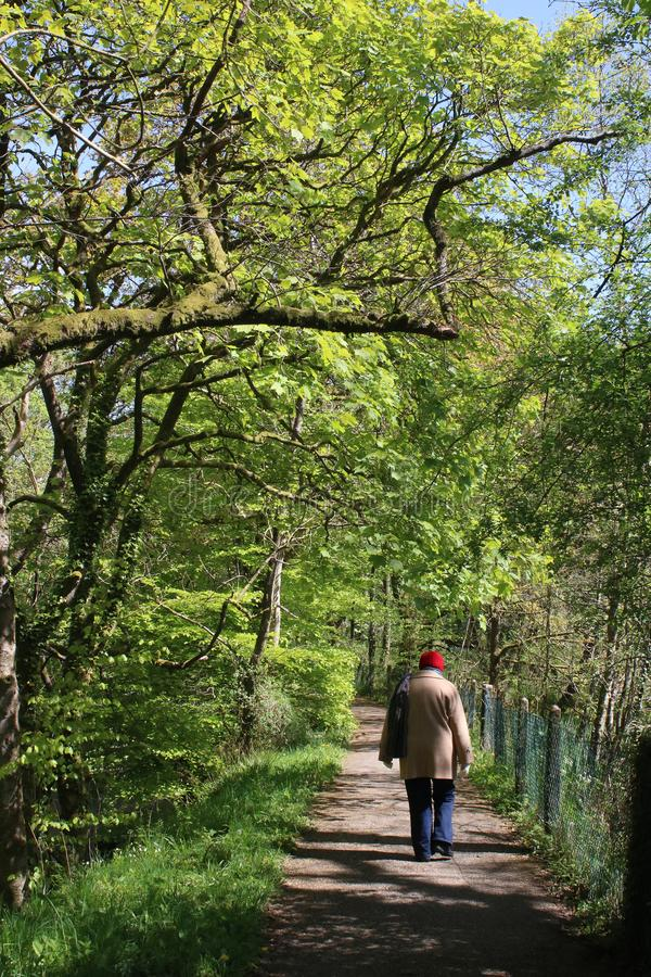 Lady walking on footpath in wood, sunny spring day stock images
