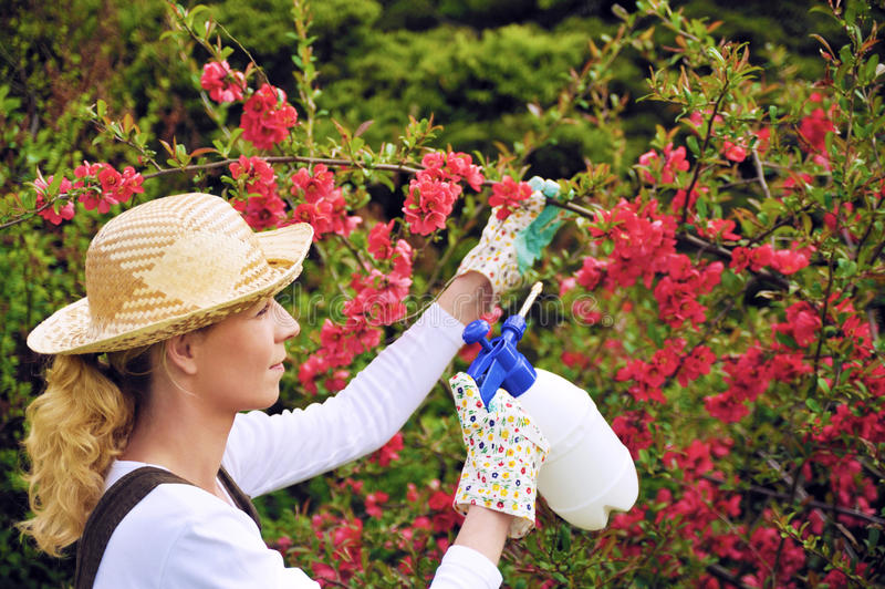 Young woman spraying tree in garden, the gardener takes care of the quince tree in orchard, holding spray bottle, happy young lady stock photography