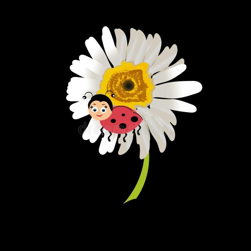 Ladybird на маргаритке, изолированном стоцвете Отображайте о лете, весне, цветках и утехе вектор иллюстрация вектора