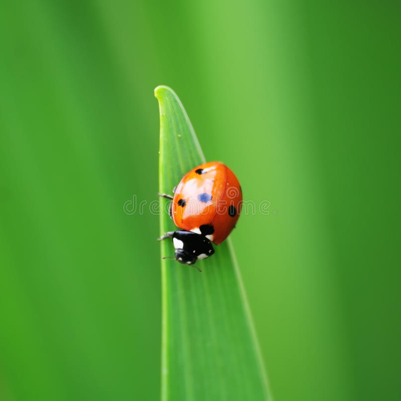 Download Ladybird stock photo. Image of bird, green, ladybird - 12080382