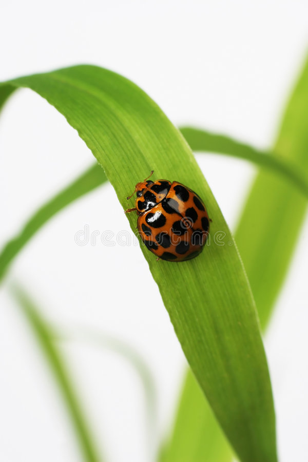 Free Ladybird Stock Photo - 1230650