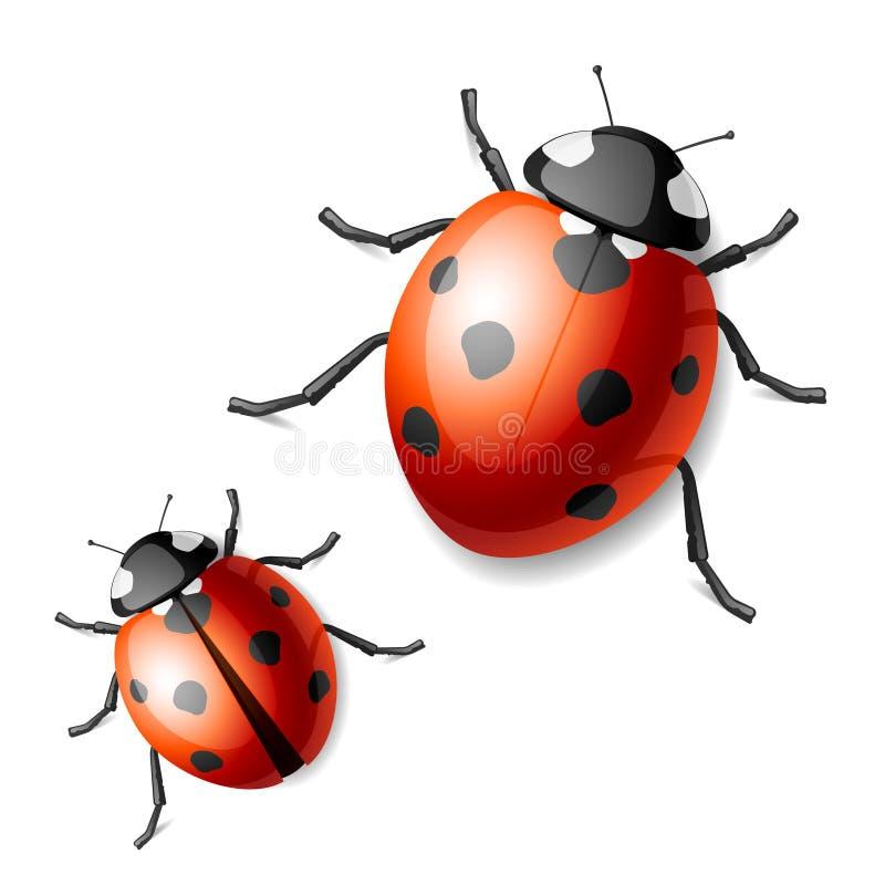 Free Ladybird Royalty Free Stock Image - 12514606