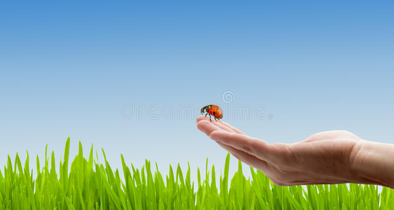 Download Ladybird stock photo. Image of grass, background, meadow - 13424498