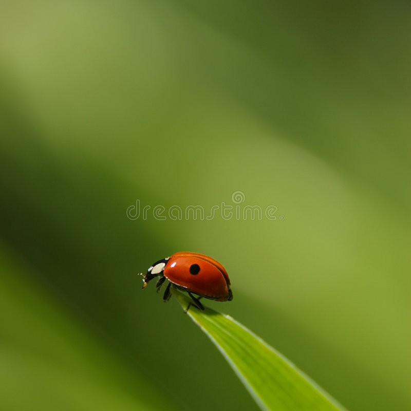 Free Ladybird Stock Photography - 236872