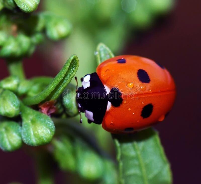 Free Ladybird Stock Photo - 4608350