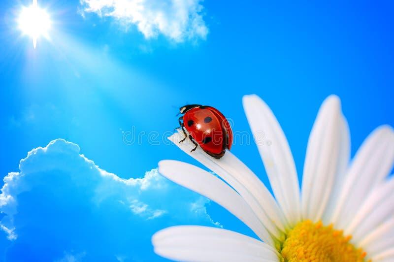 Download Ladybird stock image. Image of flora, black, ecology, beauty - 6234277