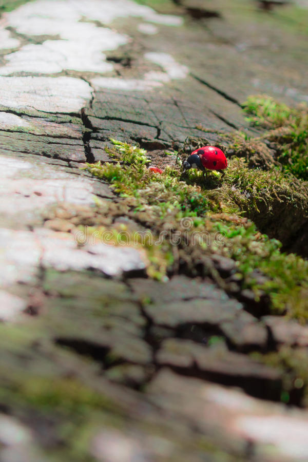 ladybird fotografia de stock royalty free