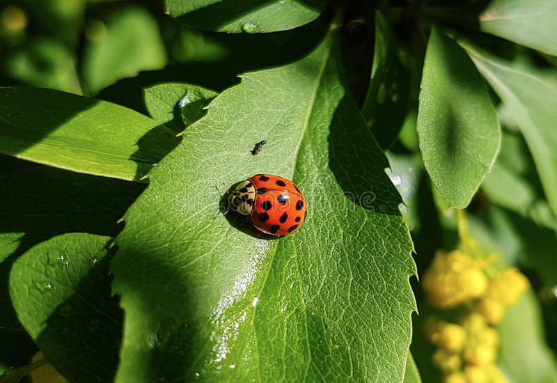 ladybird stockfotos