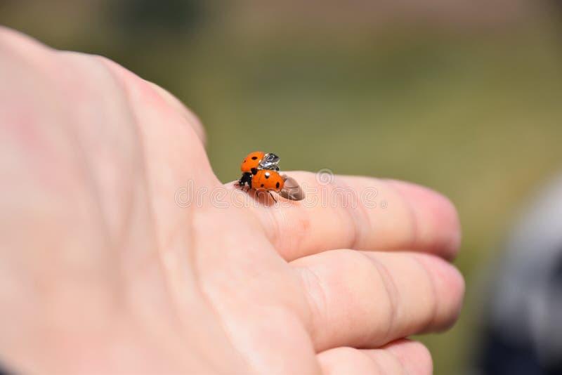 ladybird imágenes de archivo libres de regalías