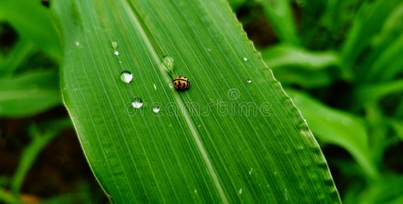 ladybird fotos de stock royalty free