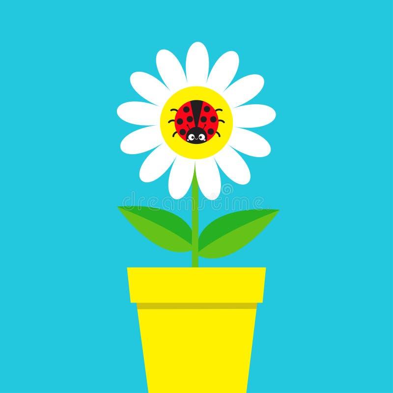 Ladybird biedronki insekta obsiadanie na białej stokrotki chamomile Rumianek ikona Śliczna narastająca kwiatu garnka rośliny kole ilustracji