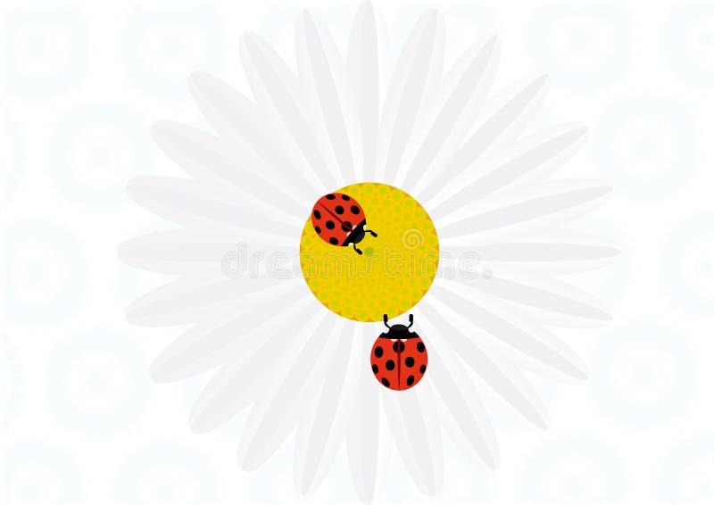 Ladybird on daisy royalty free illustration