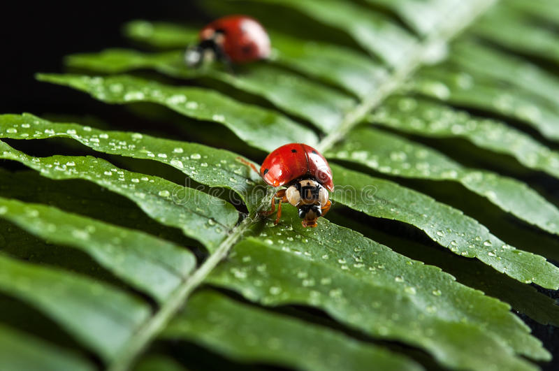 Download Ladybird on green leaf stock image. Image of nature, background - 22023295