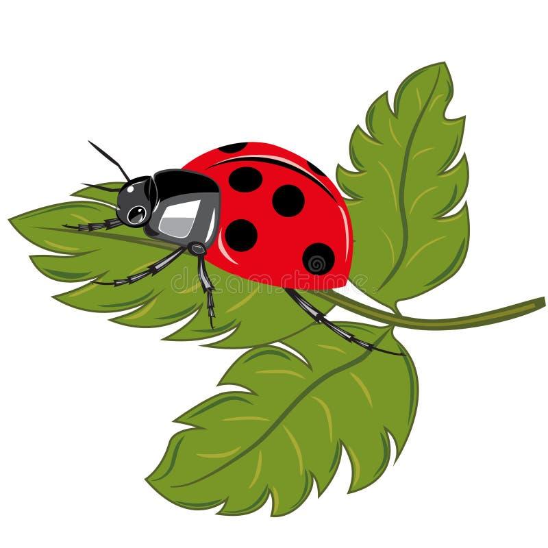 Ladybird on the green leaf royalty free illustration