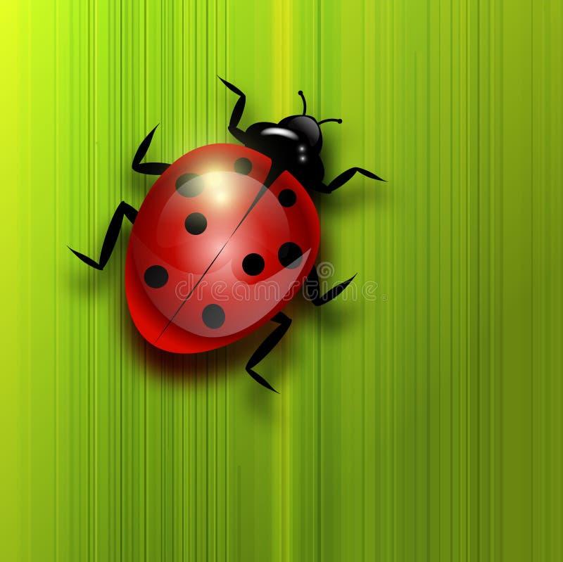 Ladybird on green leaf. royalty free illustration