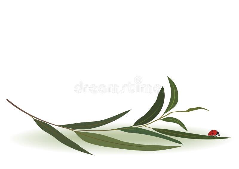Ladybird i eukaliptus royalty ilustracja