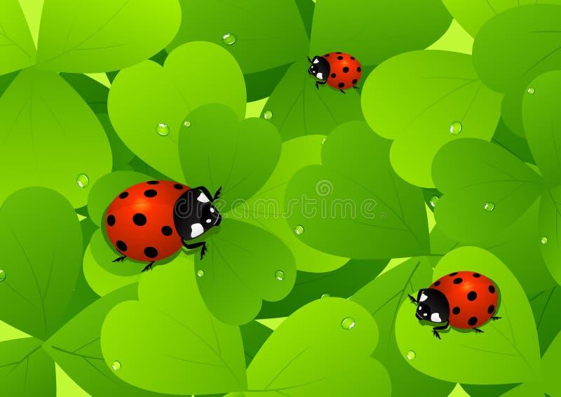 Ladybird on leaf stock illustration
