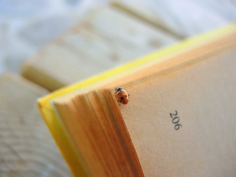 Ladybird lisant dans un livre image libre de droits
