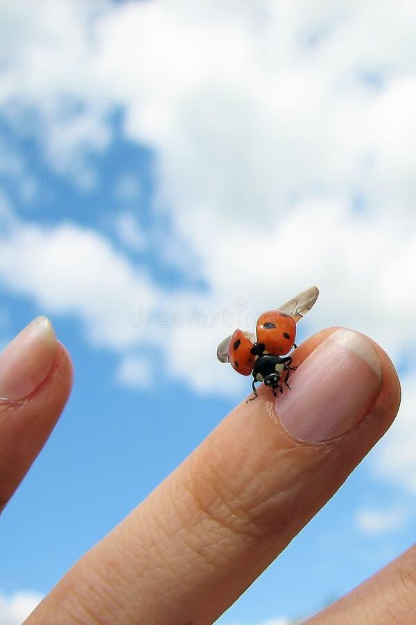 Free Ladybird On Finger Royalty Free Stock Image - 7744186