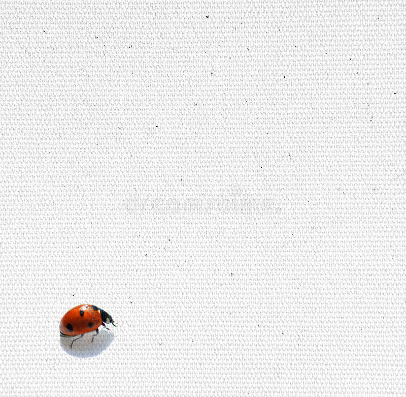 Ladybird on paper royalty free stock images