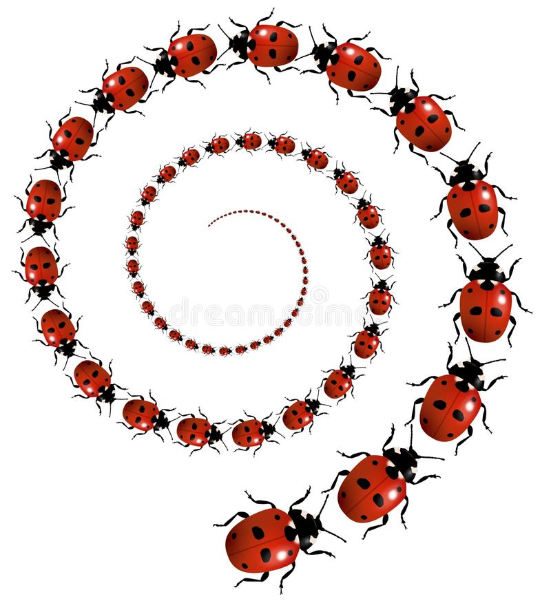 Ladybird Spiral royalty free stock image